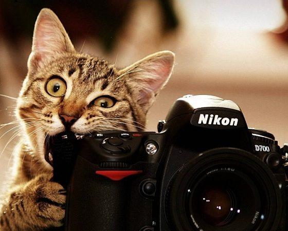 Fotostudio te huur